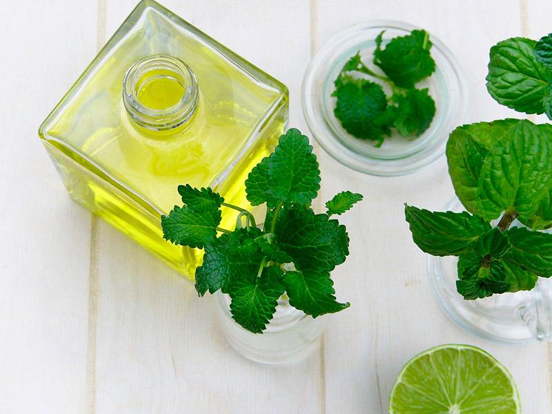 Apprenez le massage Equin à base d'huiles essentielles